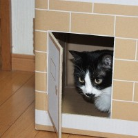 カインズの猫砂の箱