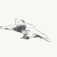 たろの寝姿 描いてみた