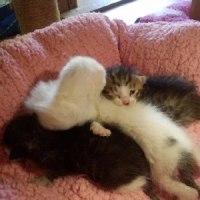 2匹目母猫、産室の準備整いました