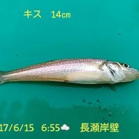 笑転爺の釣行記 6月15日☀ 長瀬・久里浜