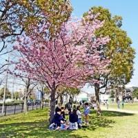 豊中の桜~豊島公園~天竺川の~・2017.4.4~4.10