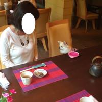レジーナリゾート軽井沢 御影用水 2日目