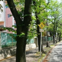「写真&俳句!」 葉桜や小学校へつづく路