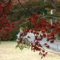 紅葉の季節ですね