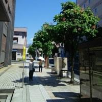 マロニエの並木通り