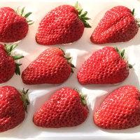 贈答用イチゴご予約承ります!