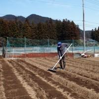 ジャガイモを植え付けています!