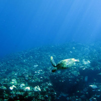 ダイビング沖縄・久米島(シチュウガマ)