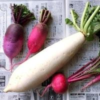 紫大根のサラダと話題のペヤング・パクチーやきそば
