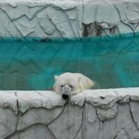 今年で80周年東山動植物園(よしだ麺)