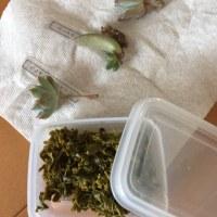 花山椒の佃煮