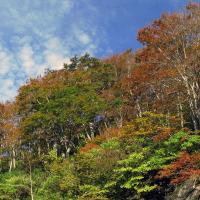 白木峰の紅葉