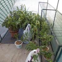 ジャンボ温室