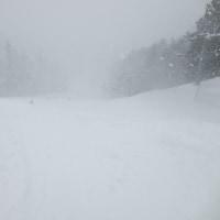 結構な雪でした。