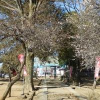 三芳野神社の白梅と紅梅