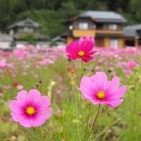 篠山方面へいってきました