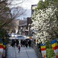 京都「大谷本廟」彼岸参拝(1)参道