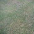 肥料焼けや除草剤のまき過ぎで赤茶けた芝生が梅雨で復活するのを願っている