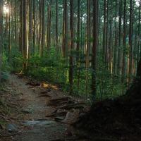 熊野古道 伊勢路