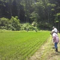 田んぼオーナー 草刈り作業&手前味噌づくり