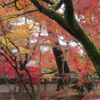 京都他短か旅:第3日