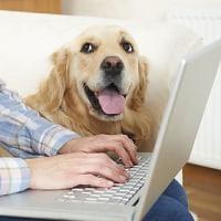 「ペット保険」は本当にお得なの?実際に検証してみた