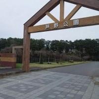 津軽の桜は今・・・