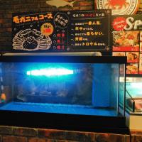 大阪・福島のカニ専門店に毛ガニがない理由