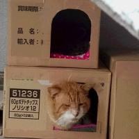 ぽかぽかハウス 1011
