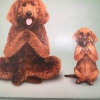 今月のyoga puppy