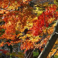 きみまち坂公園       2012.11