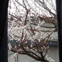 窓から・・・