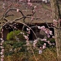 青梅・釜ヶ淵公園 3