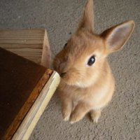 ウサギの死