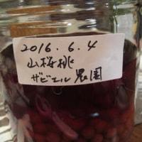 山桜桃梅酒