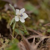 小さな花が咲き出したぞ(2)