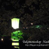 本日より「第37回酒田日和山公園桜まつり」が始まります☆