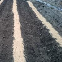 ◆ ジャガイモの植え付け