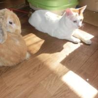 ウサギのアリスと家猫達。