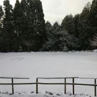 一面の雪です