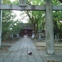 近所の神社にお散歩♪