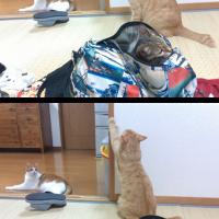 3猫写真のみ