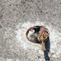 雀の宿探し