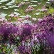 池畔に咲く