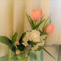 再度今年の春の花パート3 水仙+チューリップ