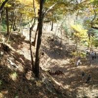 2016年11月20日 滝山城跡下草刈り  新たな遺構の出現「でっぱり」、絶景じゃ!新たなビューポイント「拝島の森」