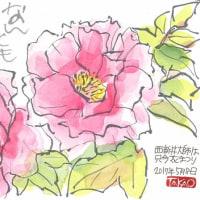 5月8日 西新井大師花まつり