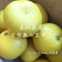 高知県産の美味しい 文旦(ブンタン)あります◡̈