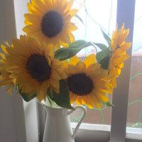 今週の花は向日葵