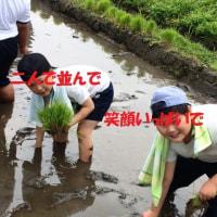 3年生の田植え体験 5.17